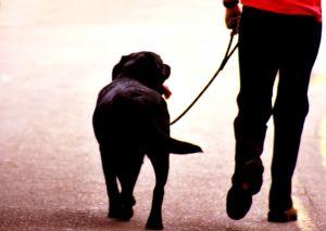 animals%20dogs%20black%20dog%20being%20walked%20on%20leash.jpg