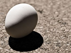 egg%20on%20pavement.jpg
